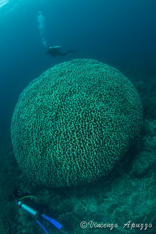 coral-dome-weda-resort-halmahera-indonesia