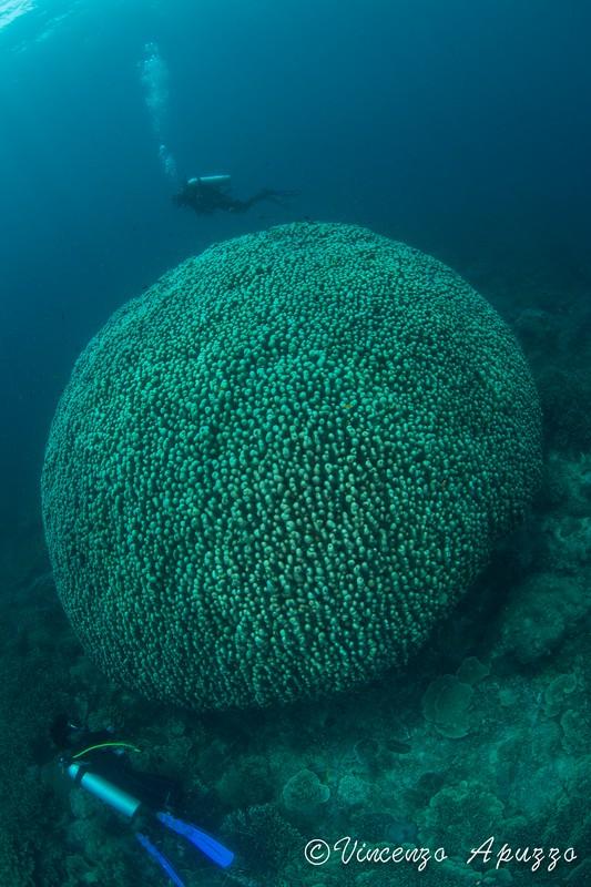 coral-dome-weda-resort-halmahera-indonesia