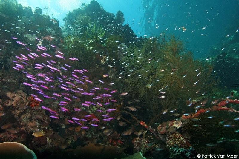 Coral Diving Weda Resort Halmahera