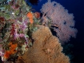 Coral Diving Weda Resort Halmahera