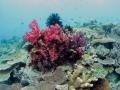 coral-weda-resort
