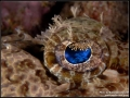 Crocodilefish Diving Weda Resort Halmahera