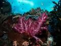 diving-weda-resort-halmahera-indonesia