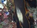 Batfish Diving Weda Resort Halmahera