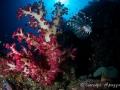 lionfish-weda-resort-halmahera-indonesia
