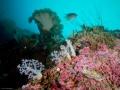 Nudibranch Diving Weda Resort Halmahera