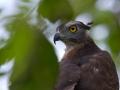 Bird Watching in Halmahera at Weda Resort