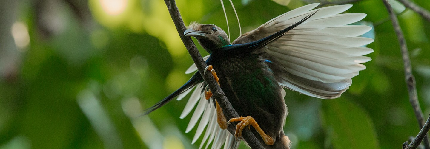 Birding on Halmahera