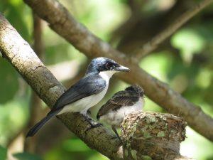 Bird watching at Weda Resort