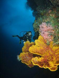 Diver with Coral at Weda Resort