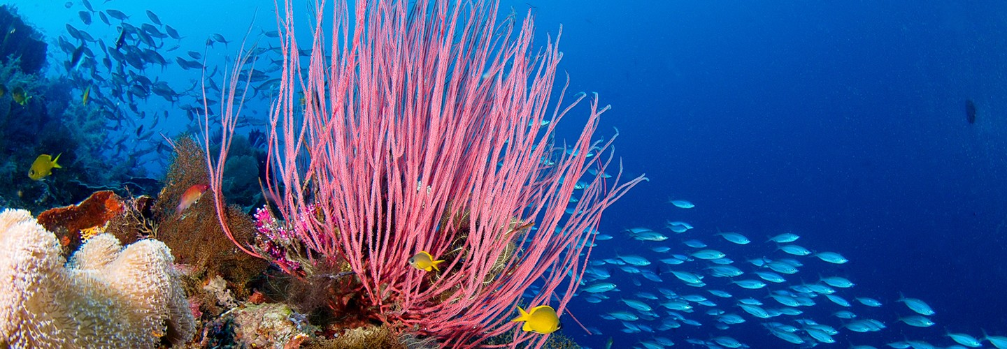 Diving pristine coral reefs