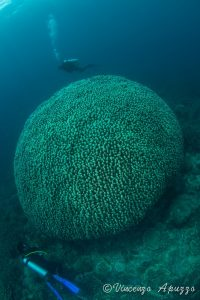 Coral dome at Weda Bay with Weda Resort