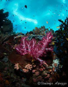 Diving in Weda Bay with Weda Resort